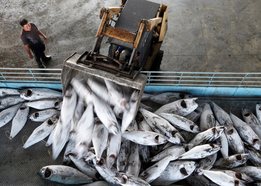 overfishing Causes of overfishing put simply, overfishing occurs when more fish are caught then are able to reproduce to repopulate because fishing has long been an industry used by humans.